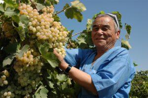 Druiven, Oezbeekse cuisine