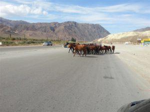 Onderweg in Kirgizië